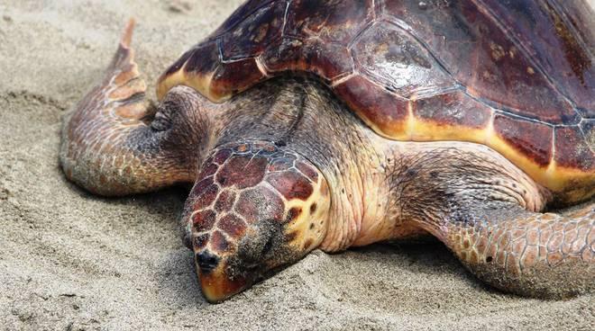 appartamenti a castiglione della pescaia - agriturismo il frantoio - tartarughe