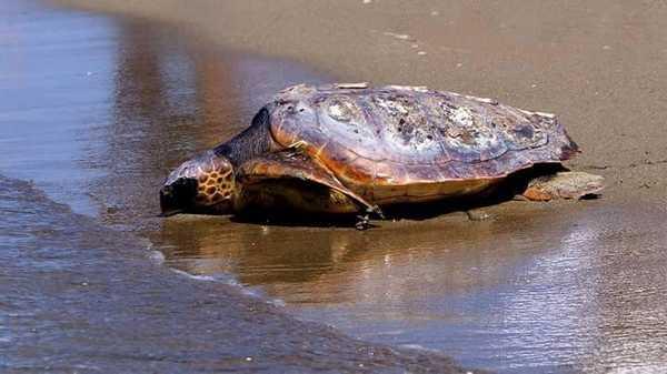 appartamenti a castiglione della pescaia - agriturismo il frantoio - tartarughe2