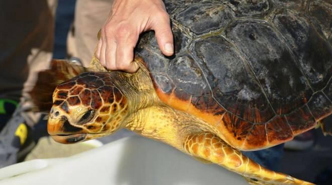 appartamenti a castiglione della pescaia - agriturismo il frantoio - tartarughe3