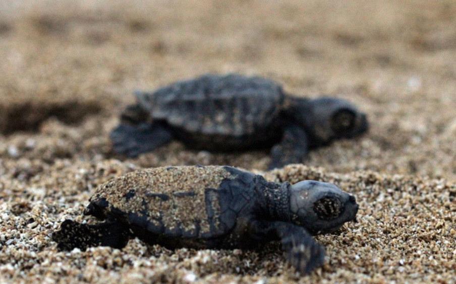 appartamenti a castiglione della pescaia - agriturismo il frantoio - tartarughe5